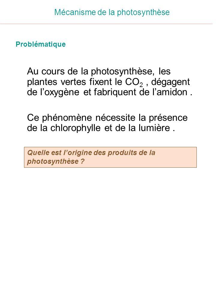 Au cours de la photosynthèse, les plantes vertes fixent le CO 2, dégagent de loxygène et fabriquent de lamidon. Ce phénomène nécessite la présence de