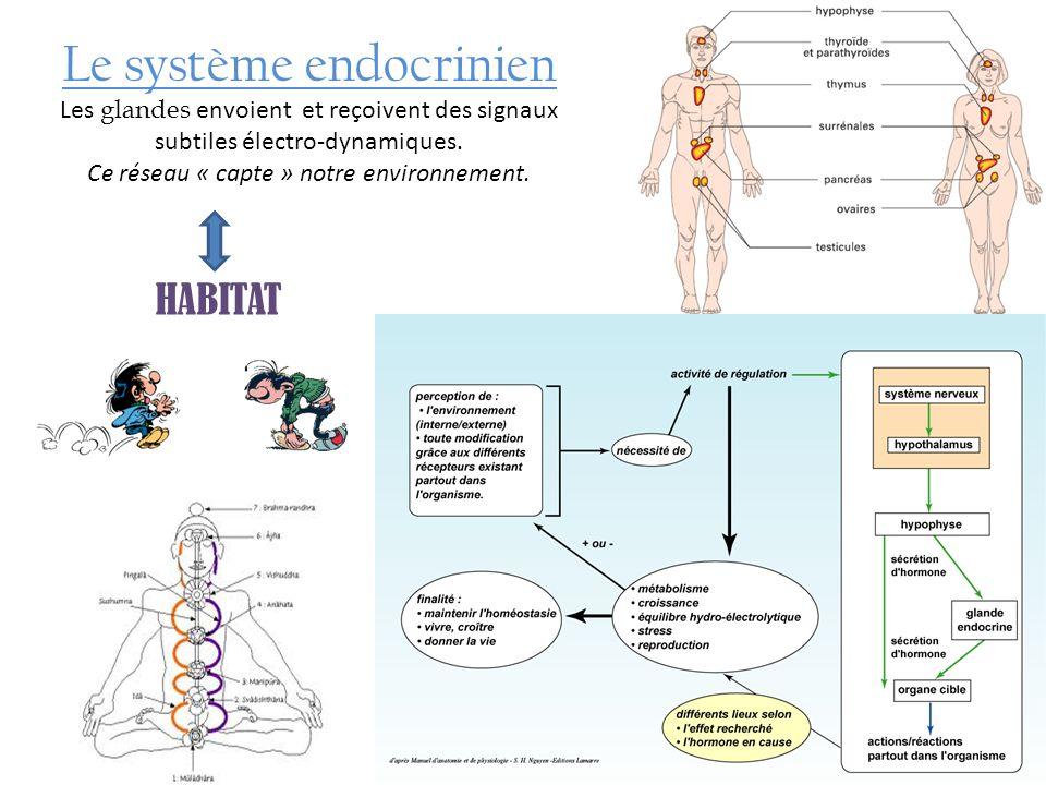 Le système endocrinien Les glandes envoient et reçoivent des signaux subtiles électro-dynamiques. Ce réseau « capte » notre environnement. HABITAT