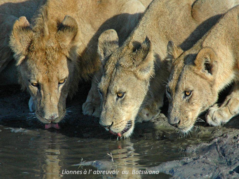 à Madagascar avec un Sifata et, un lémur brun sur lépaule