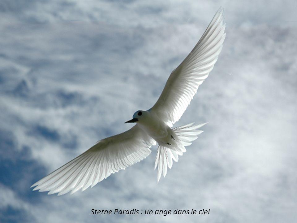 Sterne Paradis : un ange dans le ciel