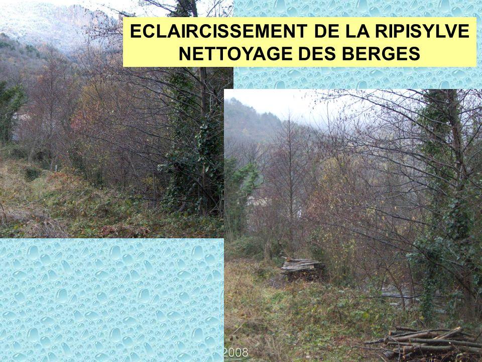 ECLAIRCISSEMENT DE LA RIPISYLVE NETTOYAGE DES BERGES