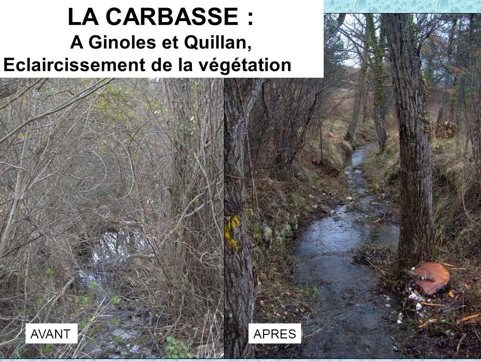 LA CARBASSE : A Ginoles et Quillan, Eclaircissement de la végétation AVANTAPRES