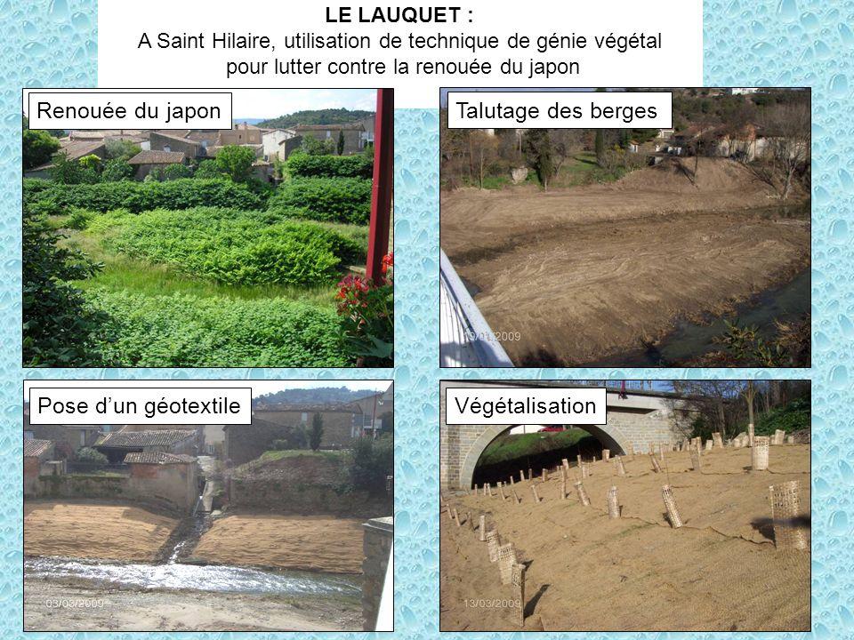LE LAUQUET : A Saint Hilaire, utilisation de technique de génie végétal pour lutter contre la renouée du japon Renouée du japon Talutage des berges Po
