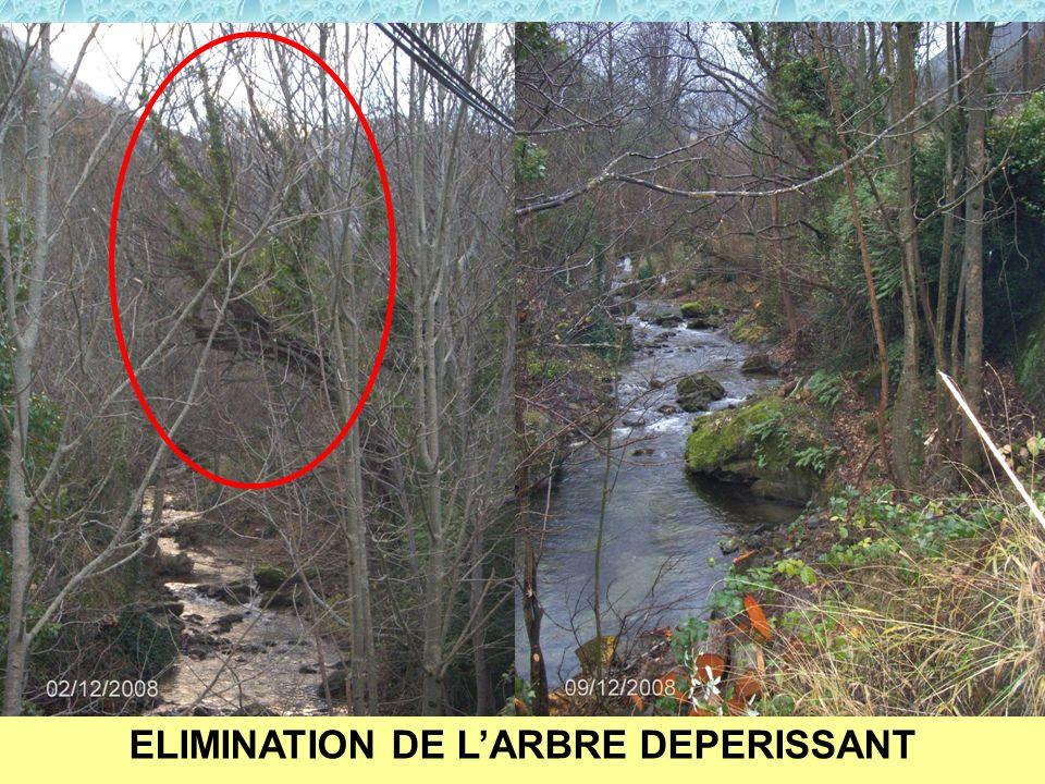 ELIMINATION DE LARBRE DEPERISSANT