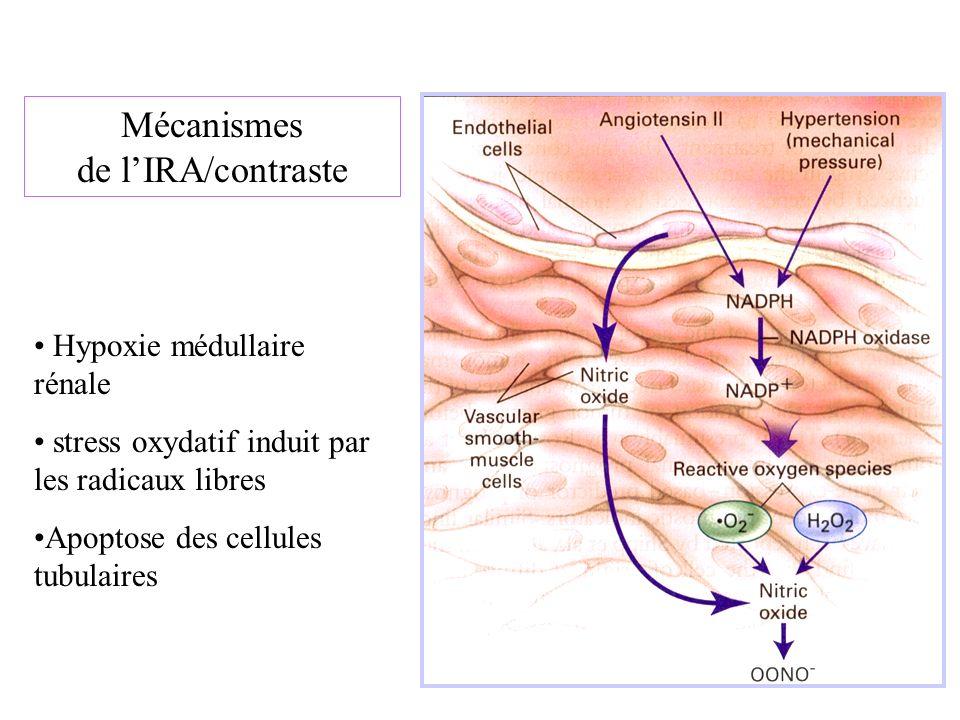 Mécanismes de lIRA/contraste Hypoxie médullaire rénale stress oxydatif induit par les radicaux libres Apoptose des cellules tubulaires
