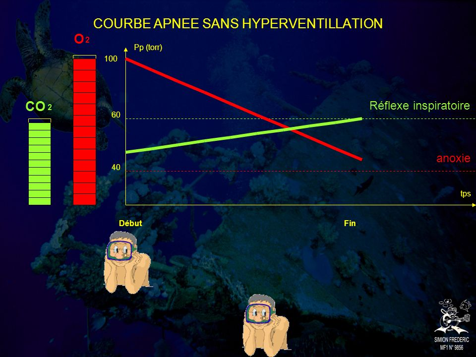 COURBE APNEE SANS HYPERVENTILLATION Pp (torr) tps O CO 2 2 DébutFin 100 60 40 Réflexe inspiratoire anoxie