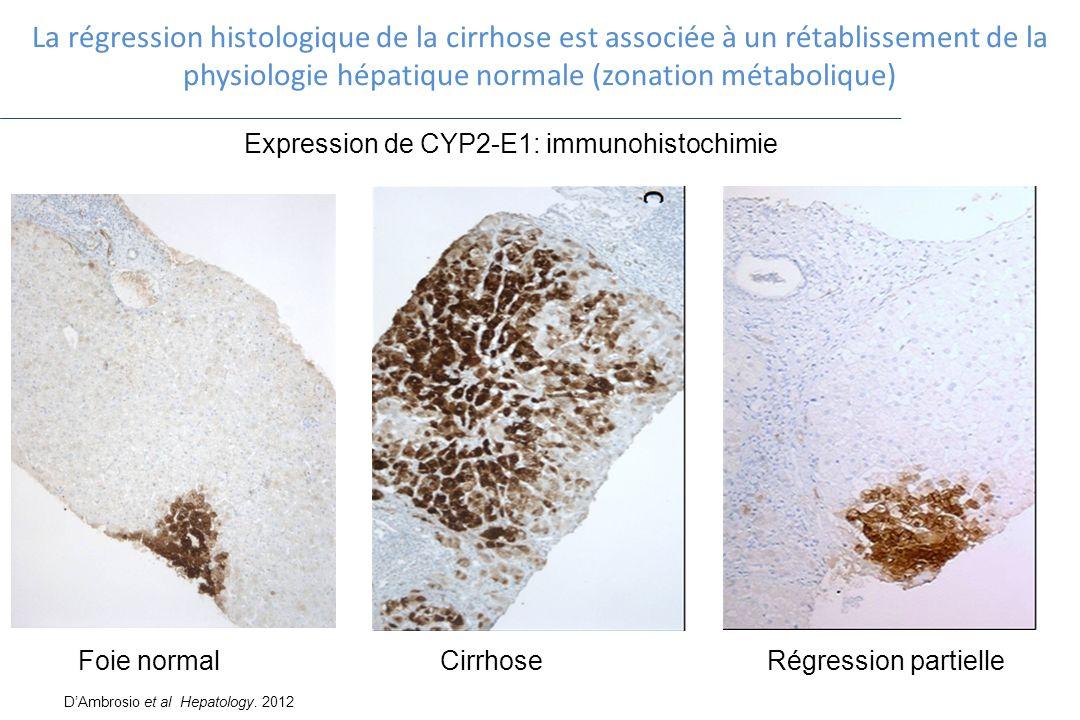 La régression histologique de la cirrhose est associée à un rétablissement de la physiologie hépatique normale (zonation métabolique) Expression de CY