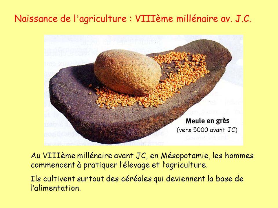 Naissance de l agriculture : VIIIème millénaire av. J.C. Au VIIIème millénaire avant JC, en Mésopotamie, les hommes commencent à pratiquer lélevage et