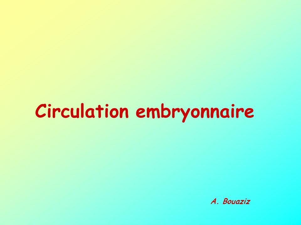 Circulation embryonnaire A. Bouaziz