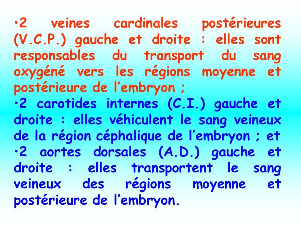 2 veines cardinales postérieures (V.C.P.) gauche et droite : elles sont responsables du transport du sang oxygéné vers les régions moyenne et postérieure de lembryon ; 2 carotides internes (C.I.) gauche et droite : elles véhiculent le sang veineux de la région céphalique de lembryon ; et 2 aortes dorsales (A.D.) gauche et droite : elles transportent le sang veineux des régions moyenne et postérieure de lembryon.