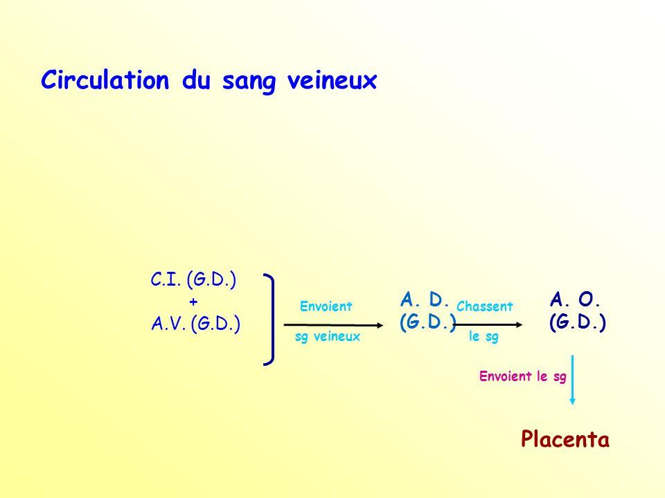 C.I.(G.D.) + A.V. (G.D.) Envoient sg veineux A. D.