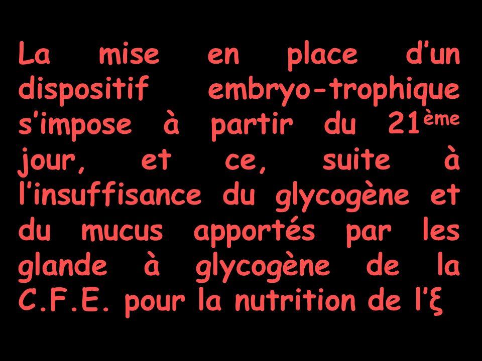 La mise en place dun dispositif embryo-trophique simpose à partir du 21 ème jour, et ce, suite à linsuffisance du glycogène et du mucus apportés par les glande à glycogène de la C.F.E.