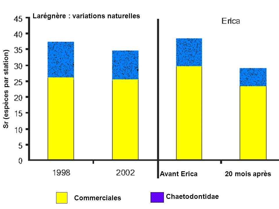 Nombre dindividus de Stegastes partitus par prélèvement sur la plate-forme du récif à St Croix.