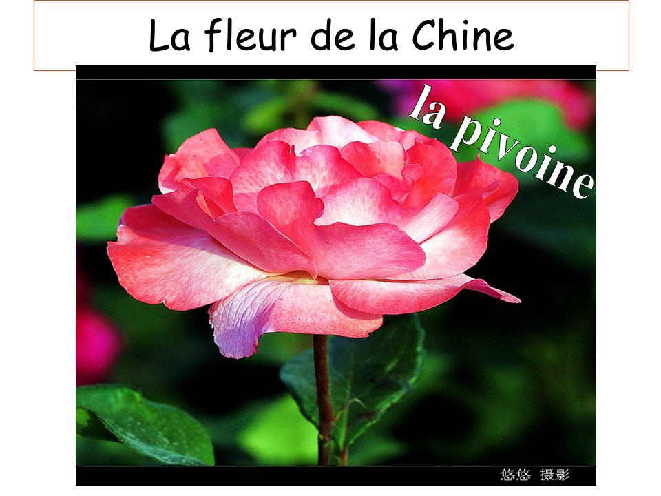 La fleur de la Chine