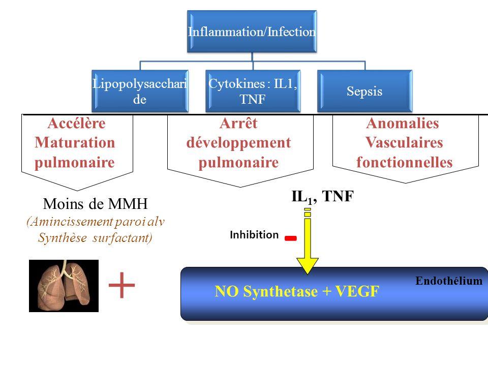 Inflammation/Infection Lipopolysacchari de Cytokines : IL1, TNF Sepsis Arrêt développement pulmonaire Accélère Maturation pulmonaire Moins de MMH (Amincissement paroi alv Synthèse surfactant) Anomalies Vasculaires fonctionnelles NO Synthetase + VEGF Endothélium IL 1, TNF + Inhibition -