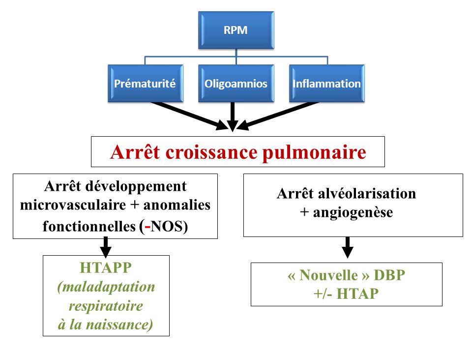 Arrêt croissance pulmonaire Arrêt développement microvasculaire + anomalies fonctionnelles (- NOS) Arrêt alvéolarisation + angiogenèse HTAPP (maladaptation respiratoire à la naissance) « Nouvelle » DBP +/- HTAP RPM PrématuritéOligoamniosInflammation
