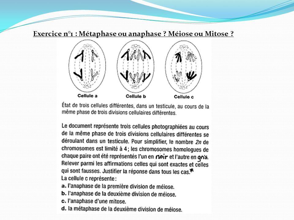 Exercice n°1 : Métaphase ou anaphase ? Méiose ou Mitose ?