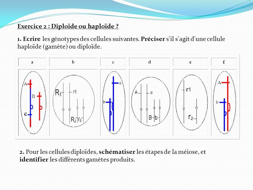 Exercice 2 : Diploïde ou haploïde ? 1. Ecrire les génotypes des cellules suivantes. Préciser s'il s'agit d'une cellule haploïde (gamète) ou diploïde.