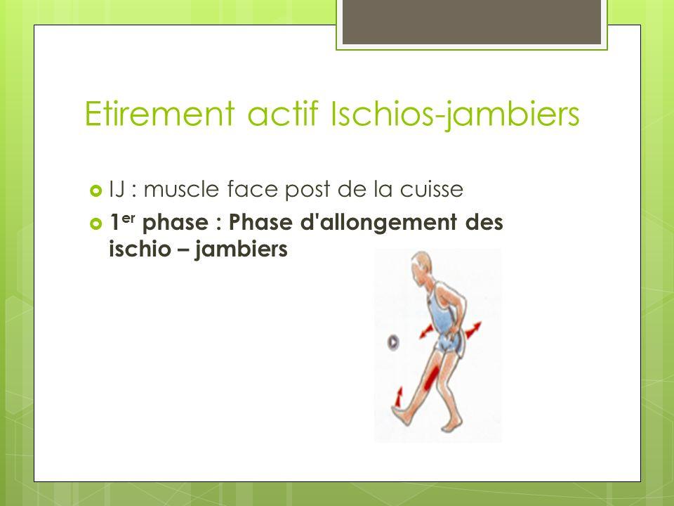 Etirement actif Ischios-jambiers IJ : muscle face post de la cuisse 1 er phase : Phase d allongement des ischio – jambiers