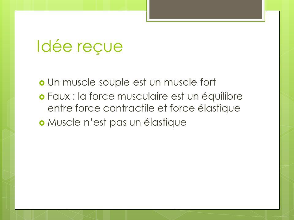 Idée reçue Un muscle souple est un muscle fort Faux : la force musculaire est un équilibre entre force contractile et force élastique Muscle nest pas un élastique
