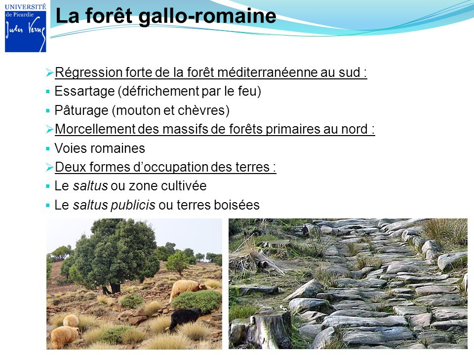 La forêt gallo-romaine Régression forte de la forêt méditerranéenne au sud : Essartage (défrichement par le feu) Pâturage (mouton et chèvres) Morcelle