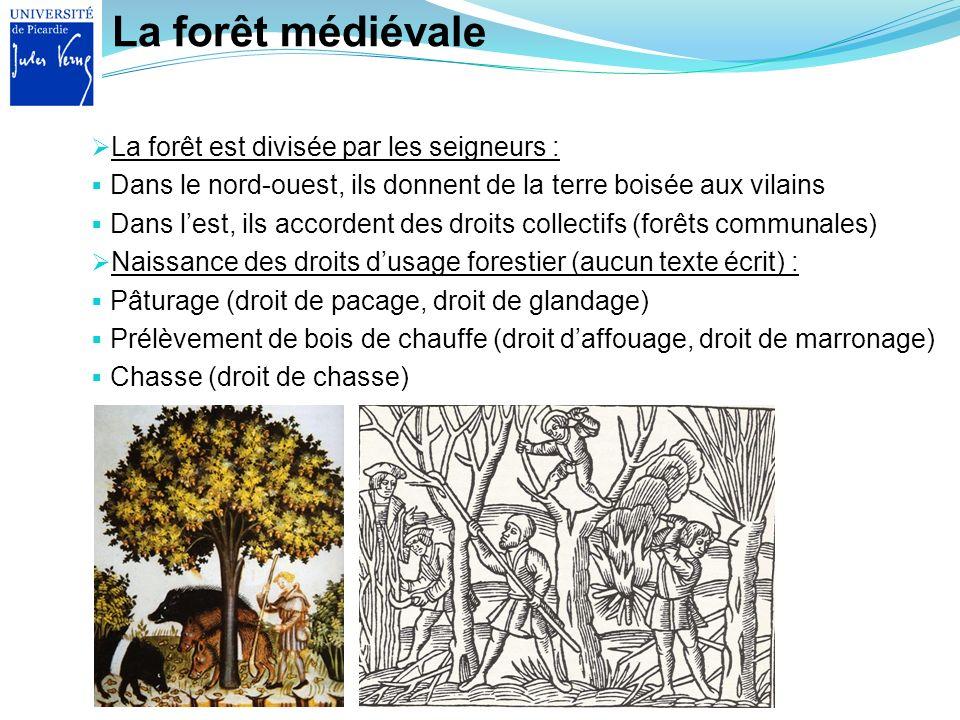 La forêt médiévale La forêt est divisée par les seigneurs : Dans le nord-ouest, ils donnent de la terre boisée aux vilains Dans lest, ils accordent de