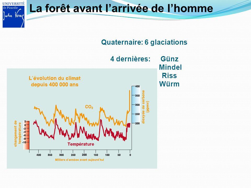 La forêt avant larrivée de lhomme Quaternaire: 6 glaciations 4 dernières: Günz Mindel Riss Würm