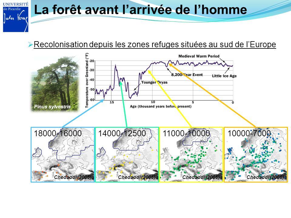 La forêt avant larrivée de lhomme Recolonisation depuis les zones refuges situées au sud de lEurope 18000-16000 Chedaddi (2006) Pinus sylvestris 14000