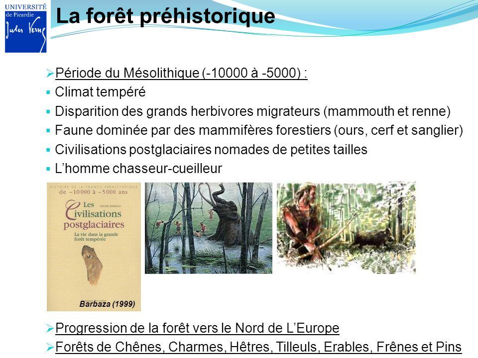 La forêt préhistorique Progression de la forêt vers le Nord de LEurope Forêts de Chênes, Charmes, Hêtres, Tilleuls, Erables, Frênes et Pins Période du