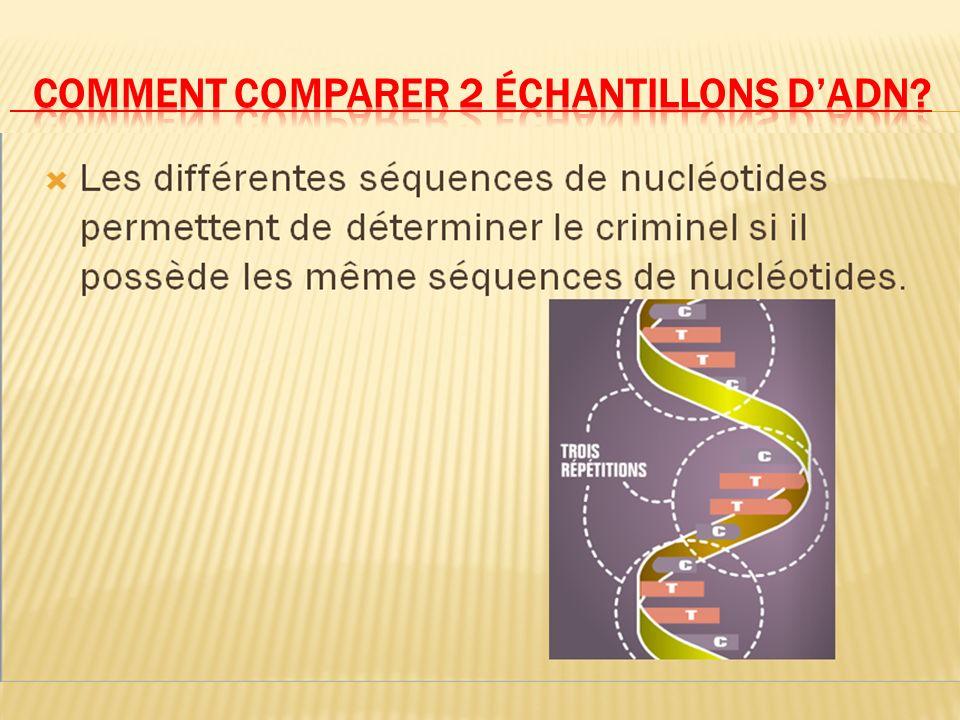 Dans presque toutes les cellules du corps, il existe de lADN (chromosomes-chromatine) qui est constitué de nombreuses chaines de nucléotides. (G,C,A &