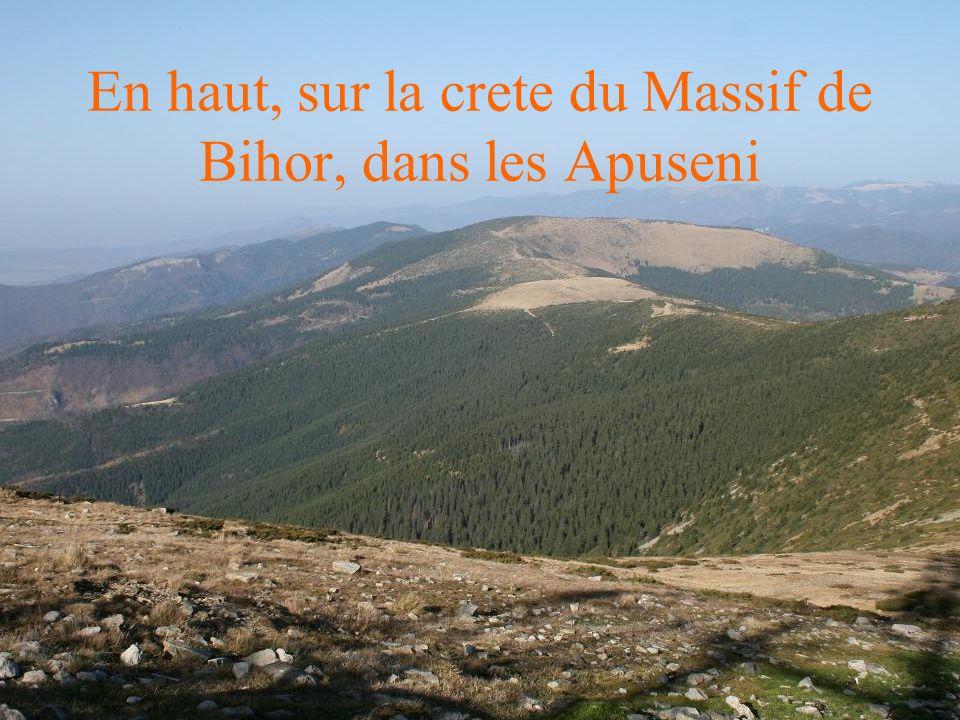 En haut, sur la crete du Massif de Bihor, dans les Apuseni