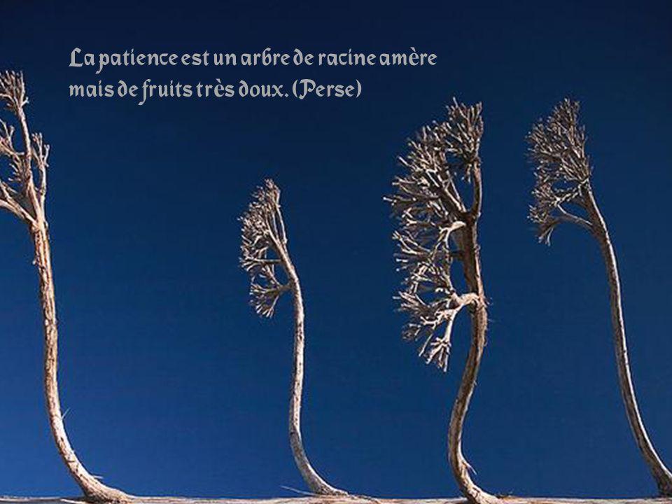 La patience est un arbre de racine am è re mais de fruits tr è s doux. (Perse)
