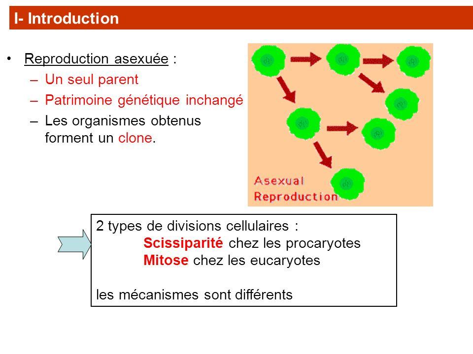 Organismes pluricellulaires La croissance et le développement se font à partir dune cellule unique par MITOSE.
