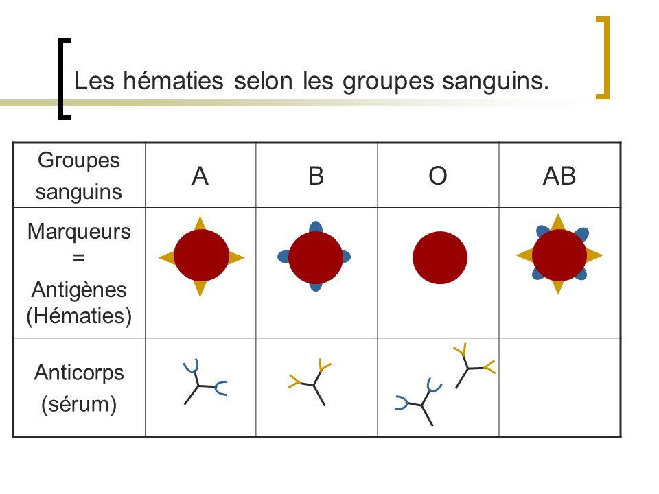 La détermination génétique des groupes sanguins.