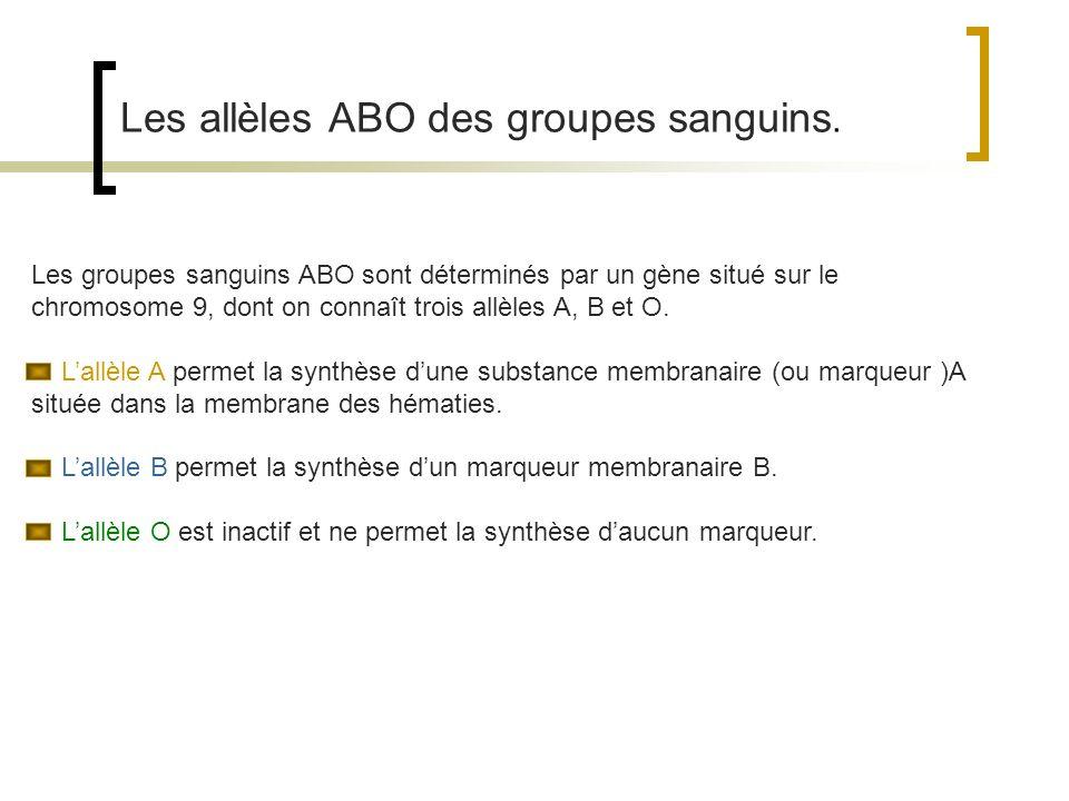 Les allèles ABO des groupes sanguins. Les groupes sanguins ABO sont déterminés par un gène situé sur le chromosome 9, dont on connaît trois allèles A,