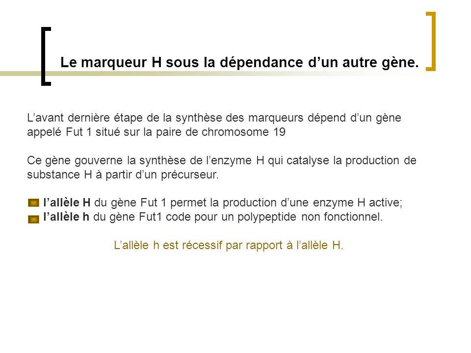 Le marqueur H sous la dépendance dun autre gène. Lavant dernière étape de la synthèse des marqueurs dépend dun gène appelé Fut 1 situé sur la paire de