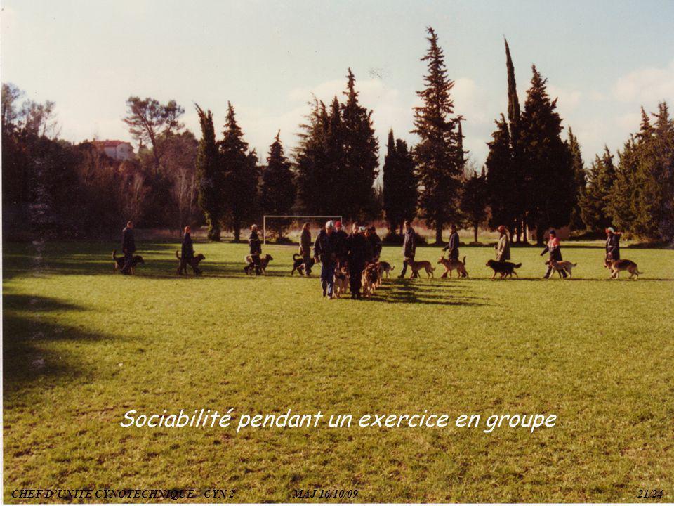 Sociabilité pendant un exercice en groupe CHEF DUNITE CYNOTECHNIQUE – CYN 2 MAJ 16/10/09 21/24