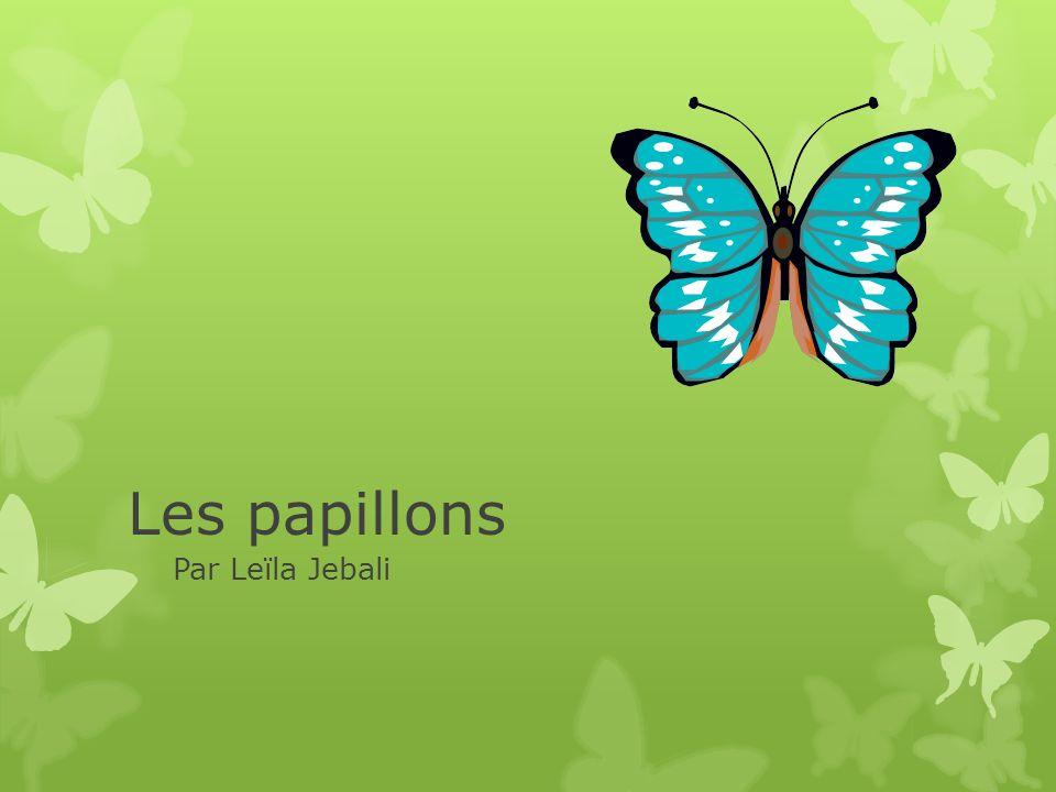 Les papillons monarques Le plus connu des papillons serait le papillon monarque.