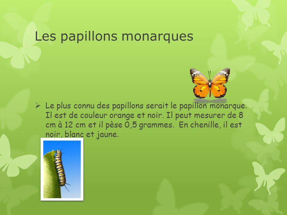 Les papillons monarques Le plus connu des papillons serait le papillon monarque. Il est de couleur orange et noir. Il peut mesurer de 8 cm à 12 cm et