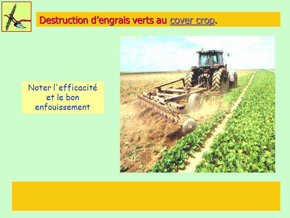 Destruction dengrais verts au cover crop. cover cropcover crop Noter l'efficacité et le bon enfouissement