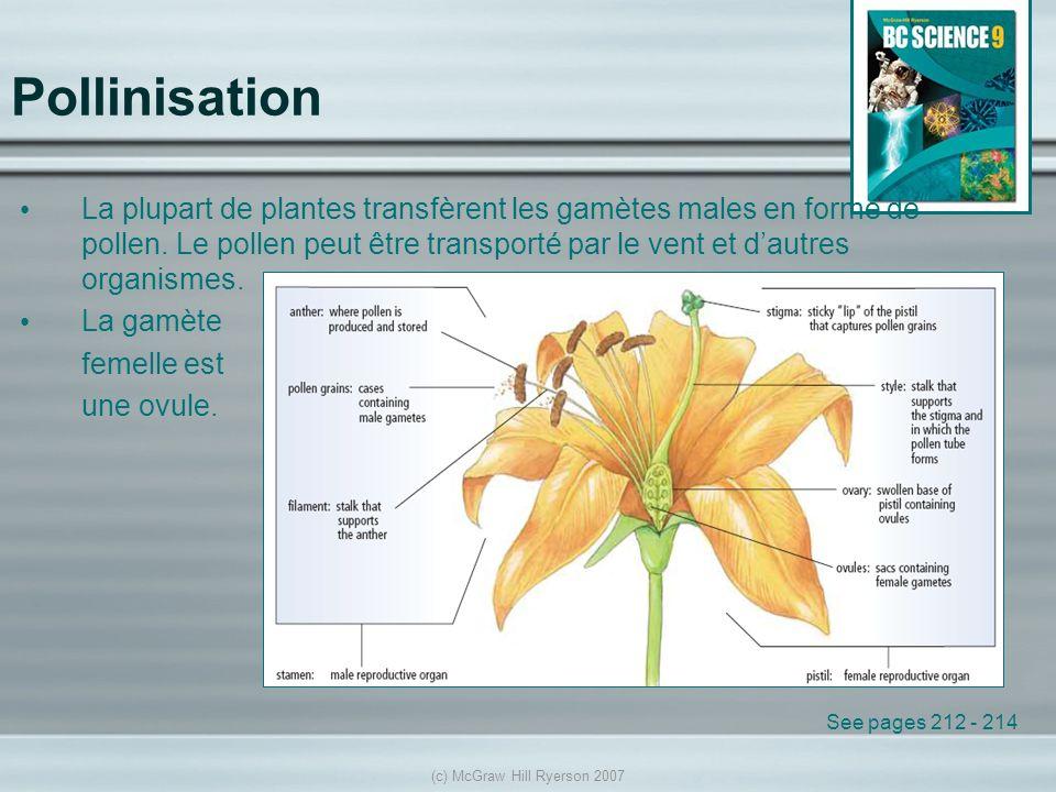 (c) McGraw Hill Ryerson 2007 Pollinisation La plupart de plantes transfèrent les gamètes males en forme de pollen. Le pollen peut être transporté par