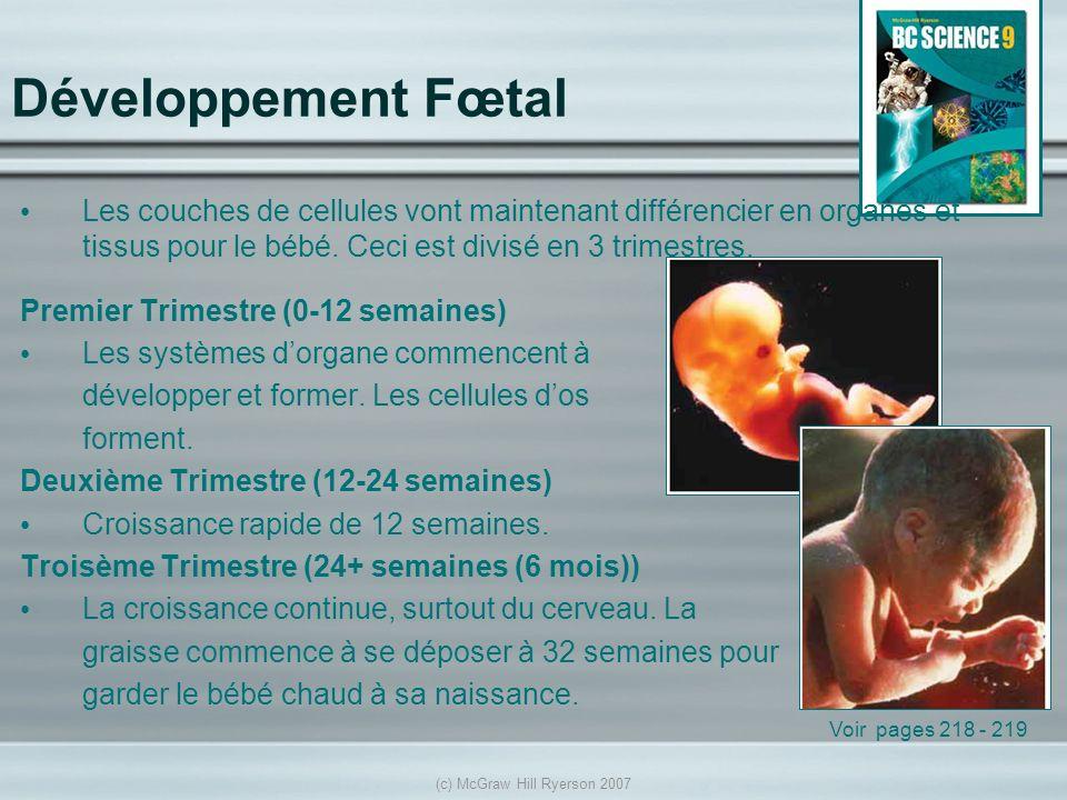 (c) McGraw Hill Ryerson 2007 Développement Fœtal Les couches de cellules vont maintenant différencier en organes et tissus pour le bébé. Ceci est divi