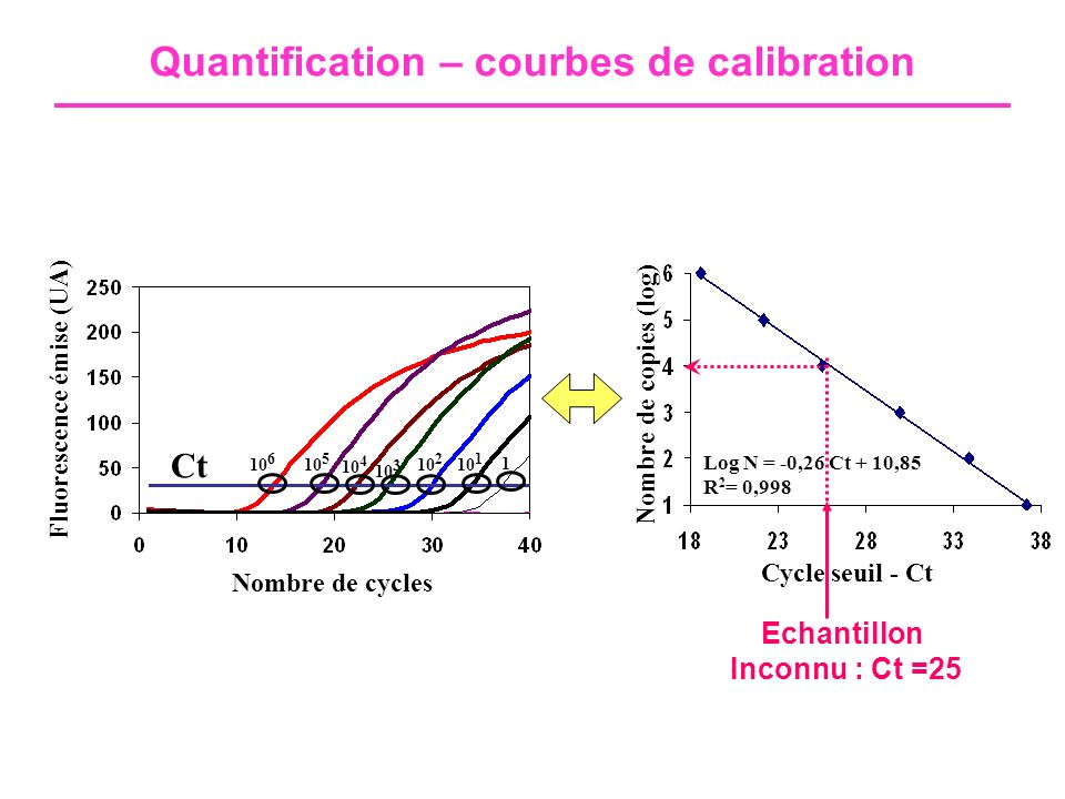 Quantification – courbes de calibration Nombre de cycles Fluorescence émise (UA) 10 1 10 6 10 5 10 4 10 3 10 2 Nombre de copies (log) Cycle seuil - Ct