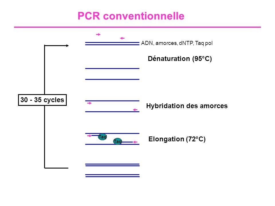 PCR conventionnelle 1- Extraction (manuelle ou automatisée) 2- Amplification 3- Révélation : Electrophorèse sur gel d agarose (1-2%) Taq + -