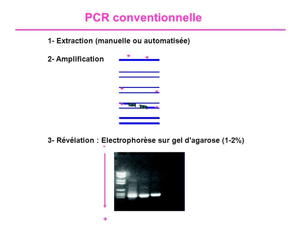 Principe du SYBR Green I L émission de fluorescence est mesurée à la fin de chaque cycle d élongation (l émission de fluorescence décroît lorsque l ADN est dénaturé à l étape suivante)
