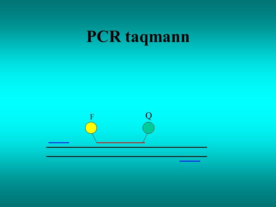 PCR taqmann F Q
