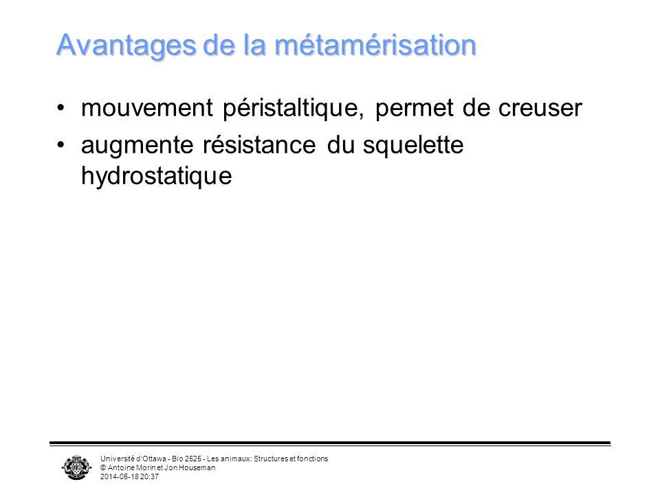 Université dOttawa - Bio 2525 - Les animaux: Structures et fonctions © Antoine Morin et Jon Houseman 2014-05-18 20:39 Avantages de la métamérisation mouvement péristaltique, permet de creuser augmente résistance du squelette hydrostatique