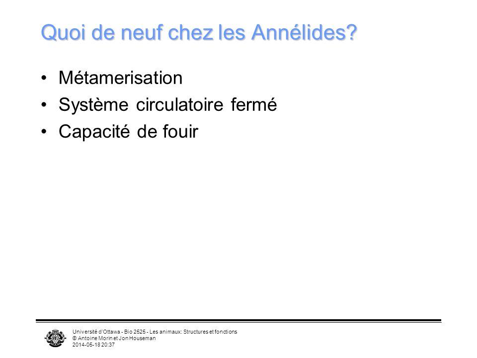 Université dOttawa - Bio 2525 - Les animaux: Structures et fonctions © Antoine Morin et Jon Houseman 2014-05-18 20:39 Quoi de neuf chez les Annélides?