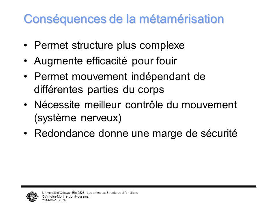 Université dOttawa - Bio 2525 - Les animaux: Structures et fonctions © Antoine Morin et Jon Houseman 2014-05-18 20:39 Conséquences de la métamérisatio