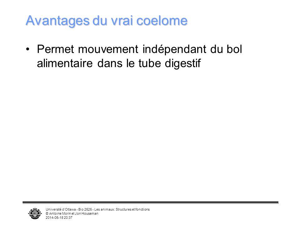 Université dOttawa - Bio 2525 - Les animaux: Structures et fonctions © Antoine Morin et Jon Houseman 2014-05-18 20:39 Avantages du vrai coelome Permet mouvement indépendant du bol alimentaire dans le tube digestif